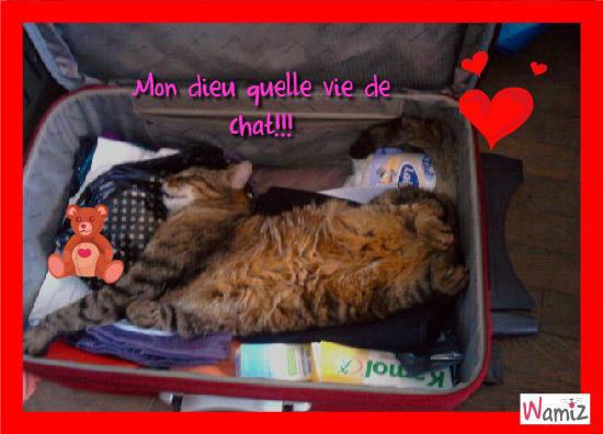 belle vie de chat!, lolcats réalisé sur Wamiz