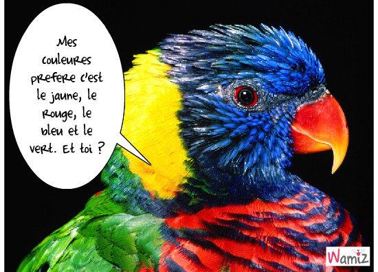 couleurs d'oiseaux, lolcats réalisé sur Wamiz
