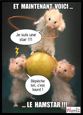 Un hamster star, lolcats réalisé sur Wamiz