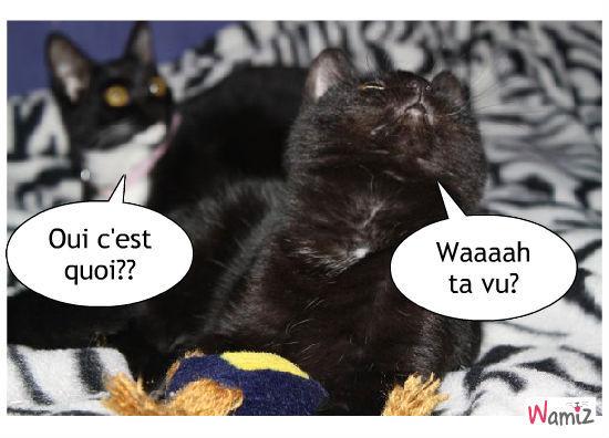 Shana & Kitty, lolcats réalisé sur Wamiz