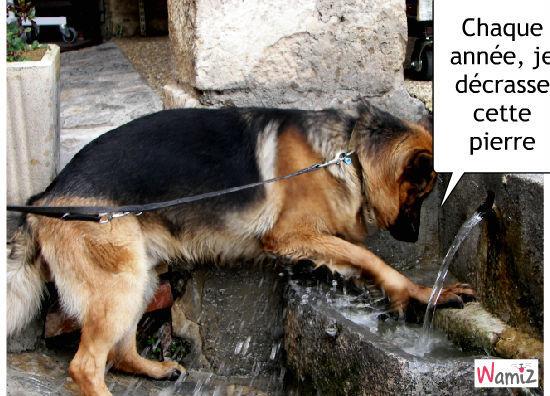 Cusco fait sa cure d'eau, lolcats réalisé sur Wamiz