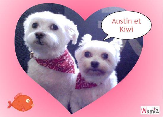 Austin & Kiwi, lolcats réalisé sur Wamiz