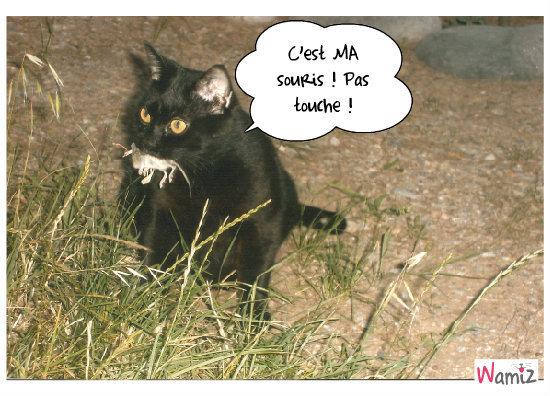 La chasse du chat, lolcats réalisé sur Wamiz