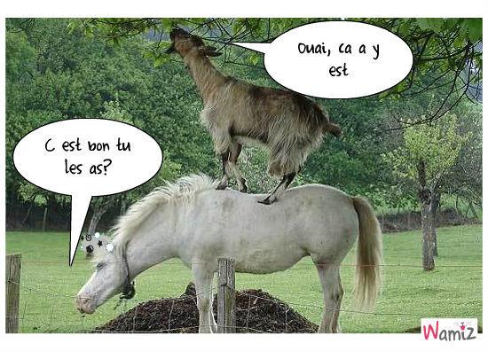 cheval + chevre, lolcats réalisé sur Wamiz