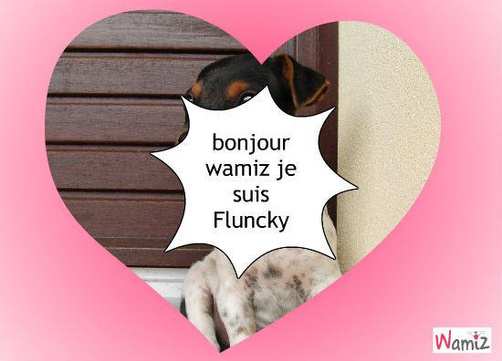FLUNCKY, lolcats réalisé sur Wamiz