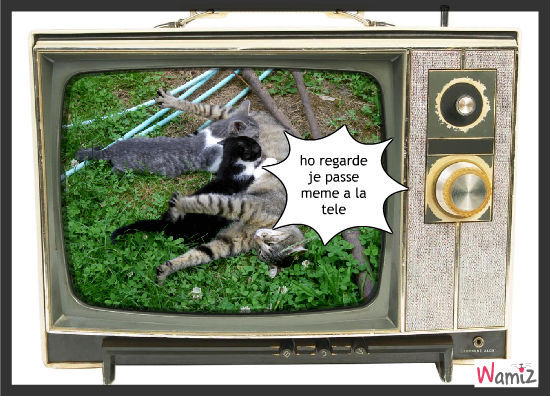 mes chats, lolcats réalisé sur Wamiz