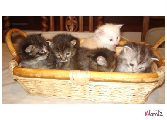 Chatons nés le 29/10/2010, lolcats réalisé sur Wamiz