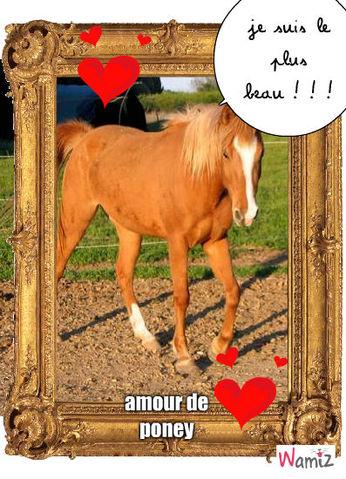 le poney roi!!!, lolcats réalisé sur Wamiz