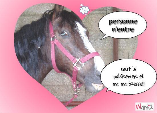 le cheval gourmand, lolcats réalisé sur Wamiz