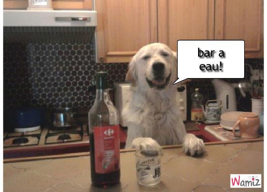 barman golden a votre service!, lolcats réalisé sur Wamiz