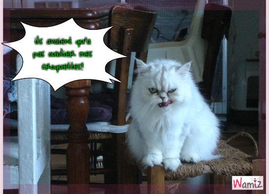 le chat grognon, lolcats réalisé sur Wamiz