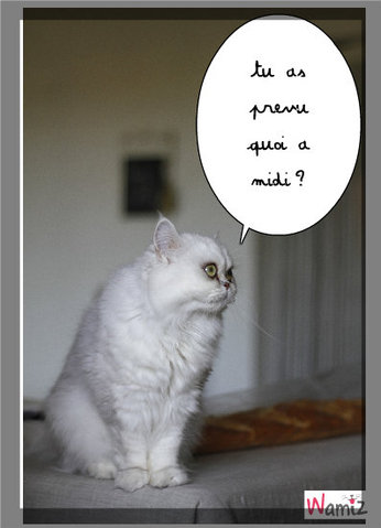le chat qui a faim, lolcats réalisé sur Wamiz