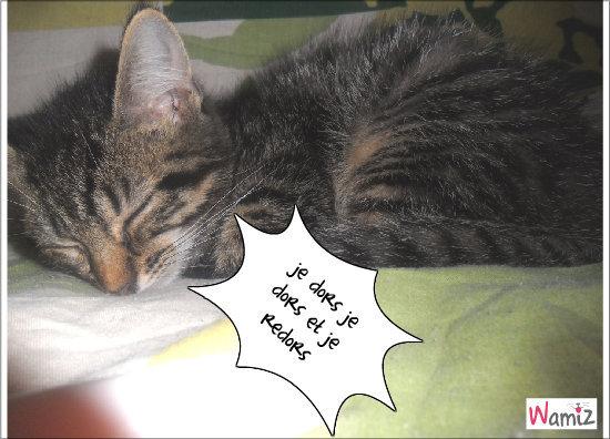 chaton dors, lolcats réalisé sur Wamiz
