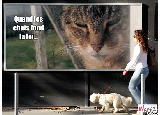 loi des chats, lolcats réalisé sur Wamiz