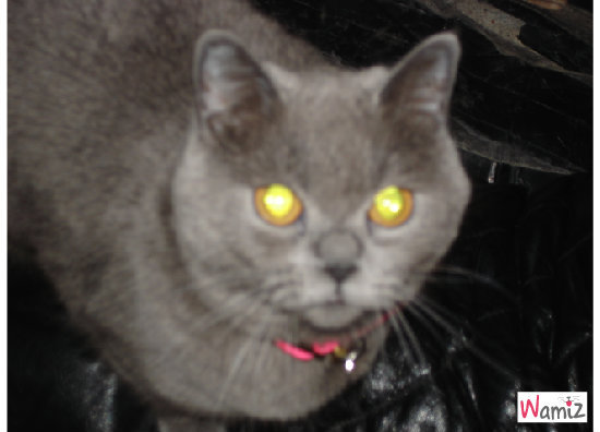 Miaou, lolcats réalisé sur Wamiz