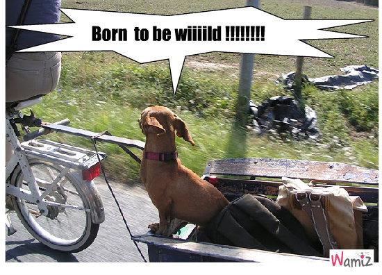 born to be wild, lolcats réalisé sur Wamiz