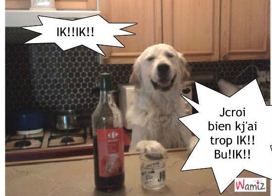 boire chien, lolcats réalisé sur Wamiz