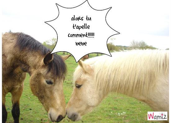 les chevaux, lolcats réalisé sur Wamiz