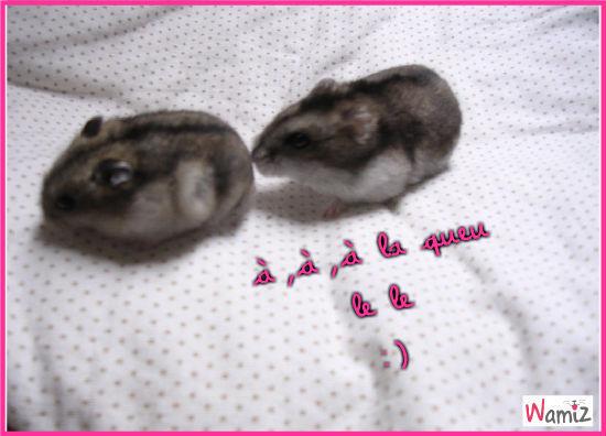 Mes ptits hamsters, lolcats réalisé sur Wamiz