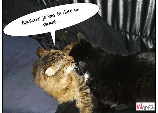 Secret catstory, lolcats réalisé sur Wamiz