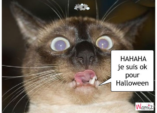 Vive Halloween, lolcats réalisé sur Wamiz
