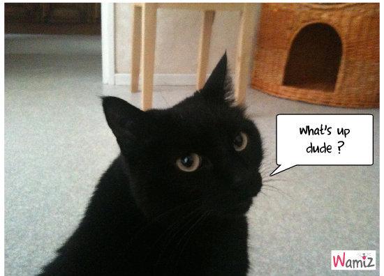 How I met your mother cat !, lolcats réalisé sur Wamiz