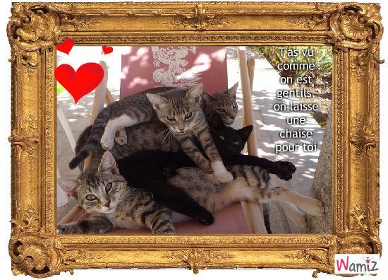 pyramide de chats, lolcats réalisé sur Wamiz