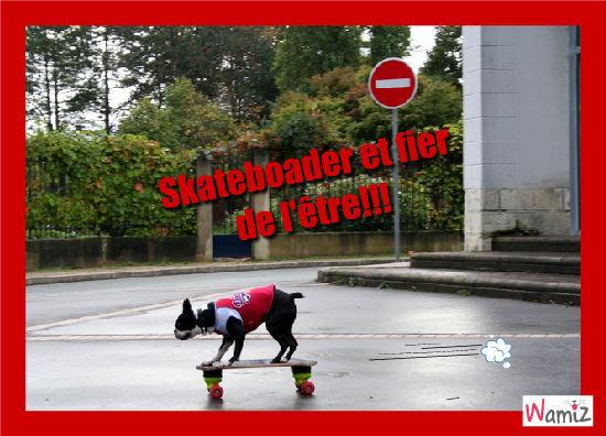 Skateboarder, lolcats réalisé sur Wamiz
