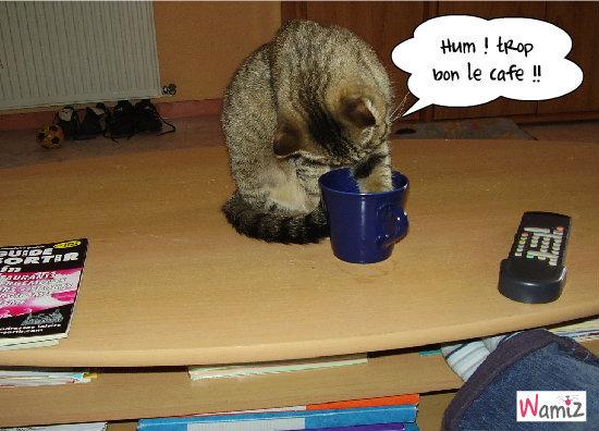 Grignette et sa goutte de café !, lolcats réalisé sur Wamiz