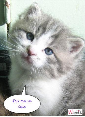 Timon chaton, lolcats réalisé sur Wamiz