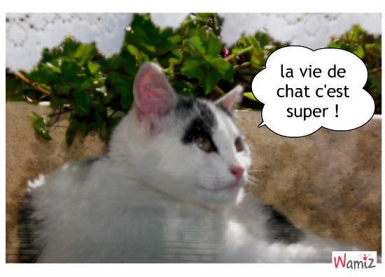 cool le chat..., lolcats réalisé sur Wamiz
