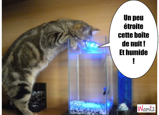 chat intrigué, lolcats réalisé sur Wamiz