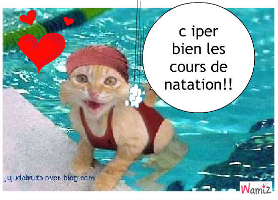 le chat qui aime l'eau, lolcats réalisé sur Wamiz