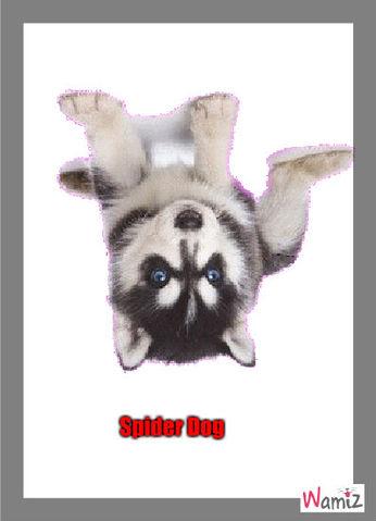 Spider Dog, lolcats réalisé sur Wamiz