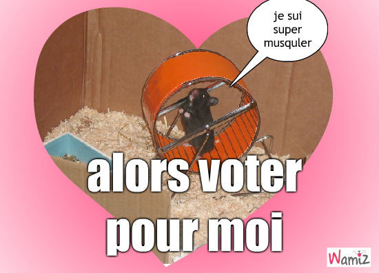 vote, lolcats réalisé sur Wamiz
