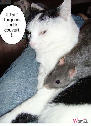 bidule et son raton, lolcats réalisé sur Wamiz