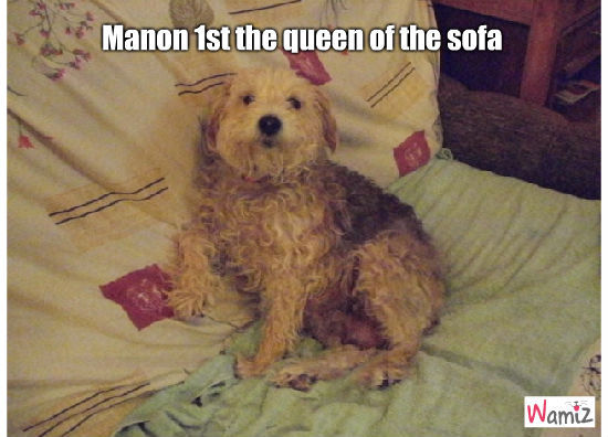 The queen of the sofa, lolcats réalisé sur Wamiz