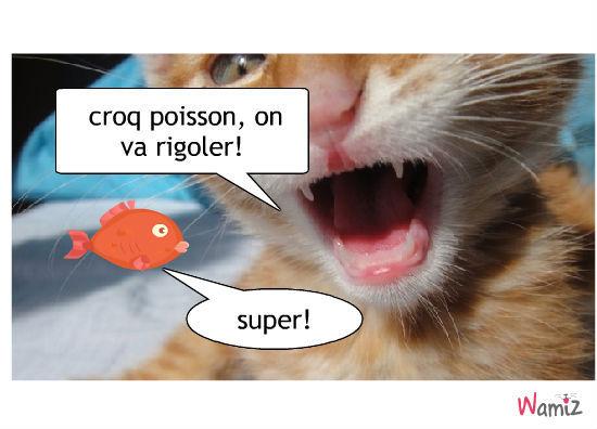 chat assasin, lolcats réalisé sur Wamiz