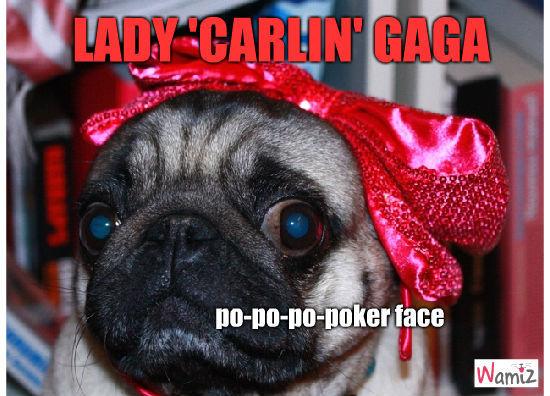Carlin Gaga, lolcats réalisé sur Wamiz