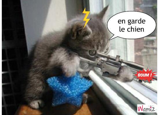 le chat tuer en série, lolcats réalisé sur Wamiz