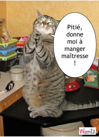 chat qui implore, lolcats réalisé sur Wamiz