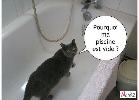 piscine à chat, lolcats réalisé sur Wamiz