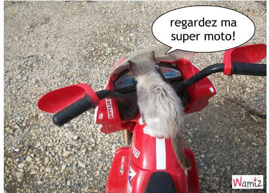 la moto de malibu, lolcats réalisé sur Wamiz