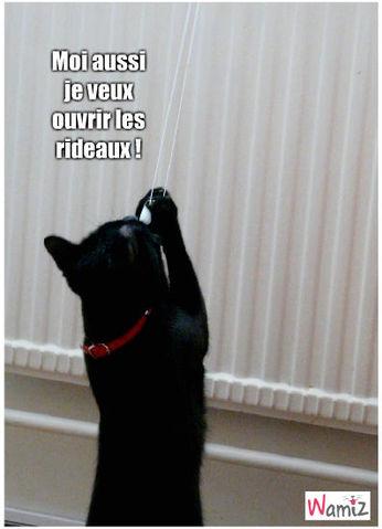 Félix tente d'ouvrir les rideaux !, lolcats réalisé sur Wamiz