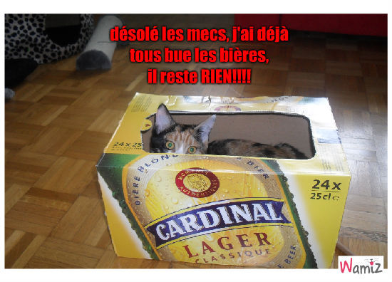 mes bières a moi!, lolcats réalisé sur Wamiz