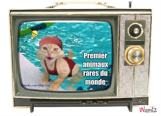 la chat-nage, lolcats réalisé sur Wamiz