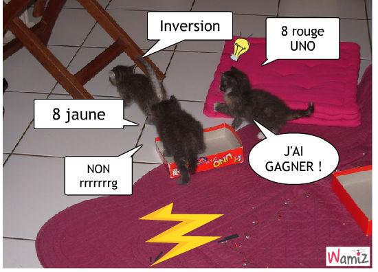 chat-UNO, lolcats réalisé sur Wamiz