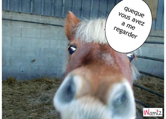 un, cheval, lolcats réalisé sur Wamiz