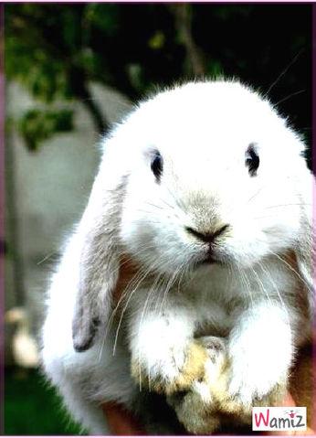 le lapin , lolcats réalisé sur Wamiz