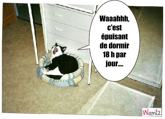 chat fatigué, lolcats réalisé sur Wamiz